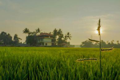 Athreya Ayurvedic Resort India